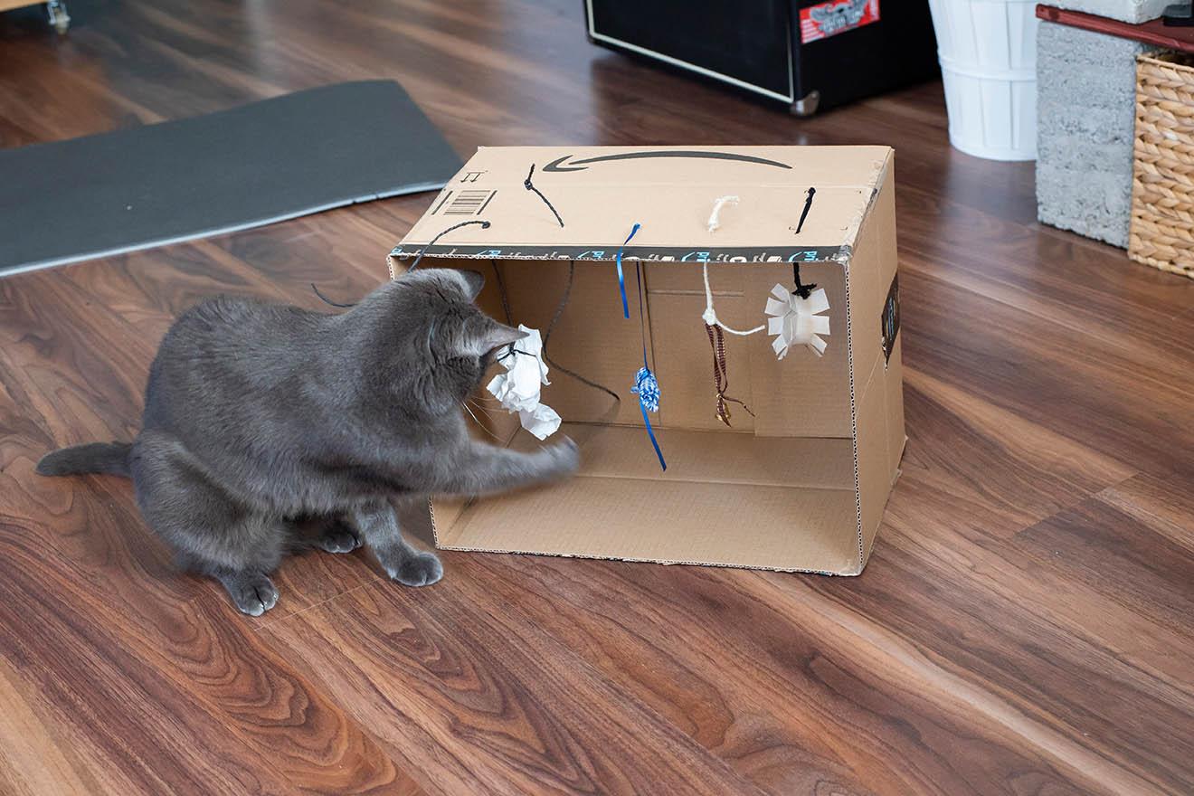 Katzenspielzeug selber machen – die 8 besten Bastelideen