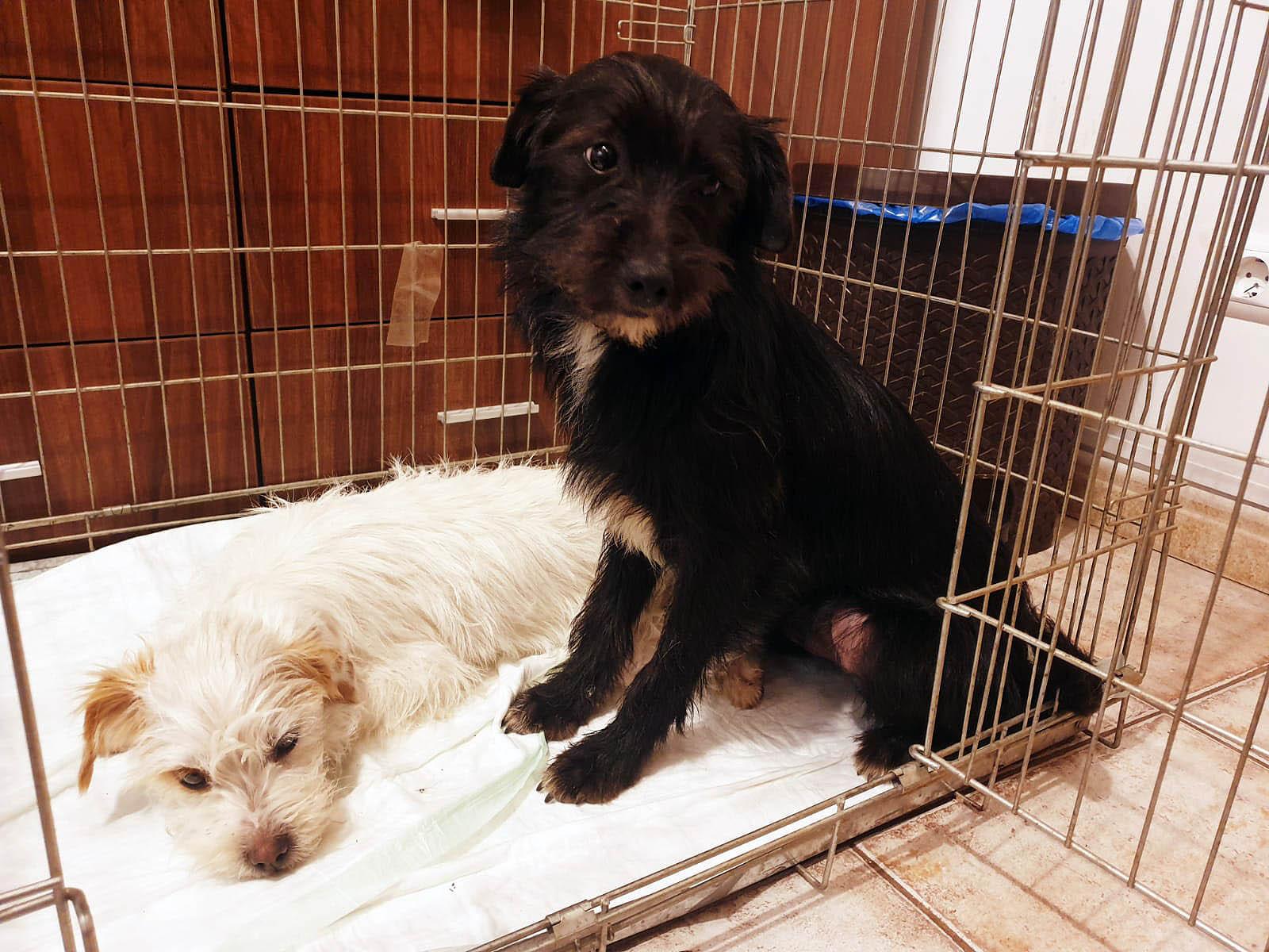 PETA HELPS ROMANIA: Hundewelpen aus dem Müll gerettet