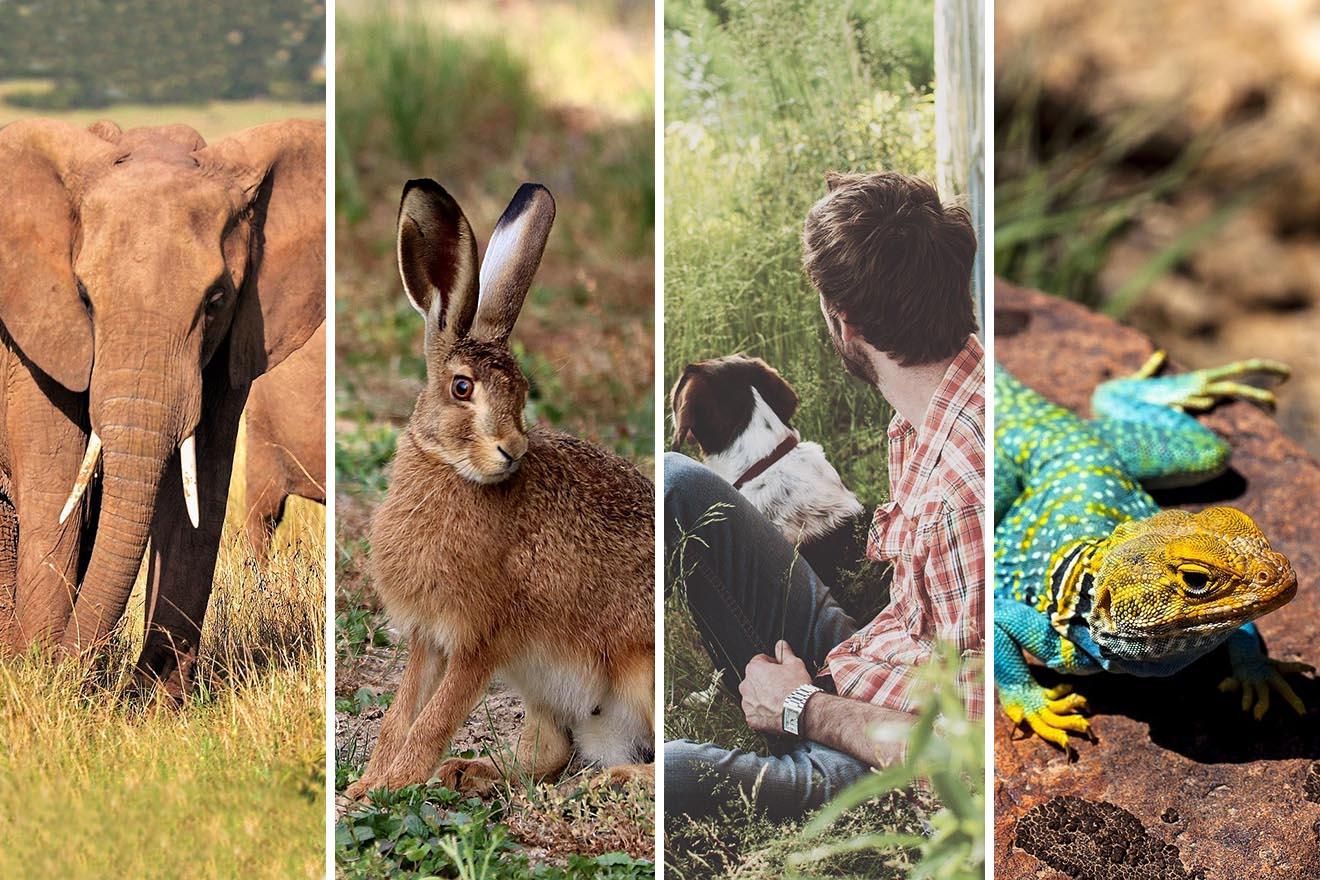 Diese Tiere profitieren von der Corona-Krise