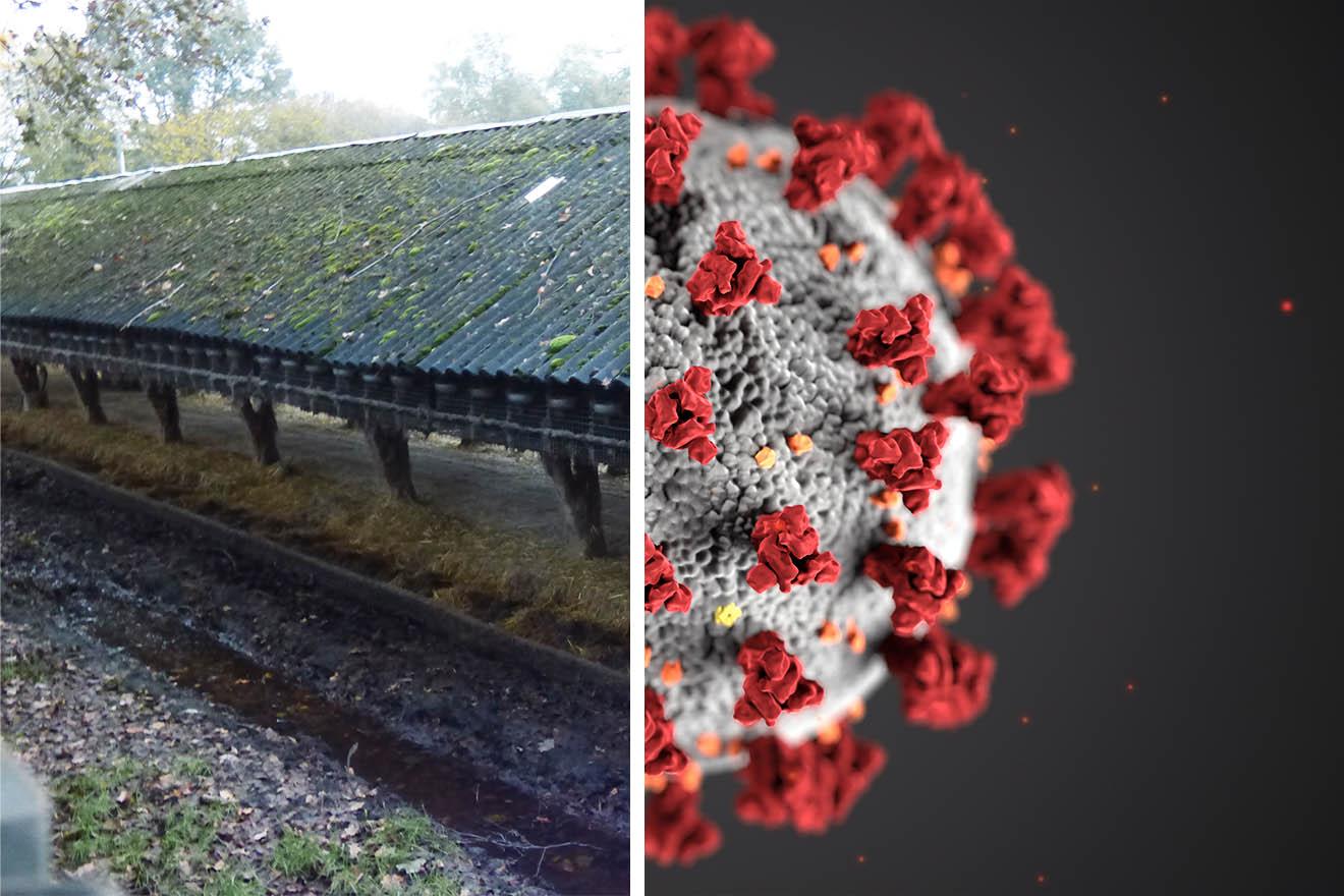 Pelzfarmen – Brutstätten für Krankheiten wie COVID-19?