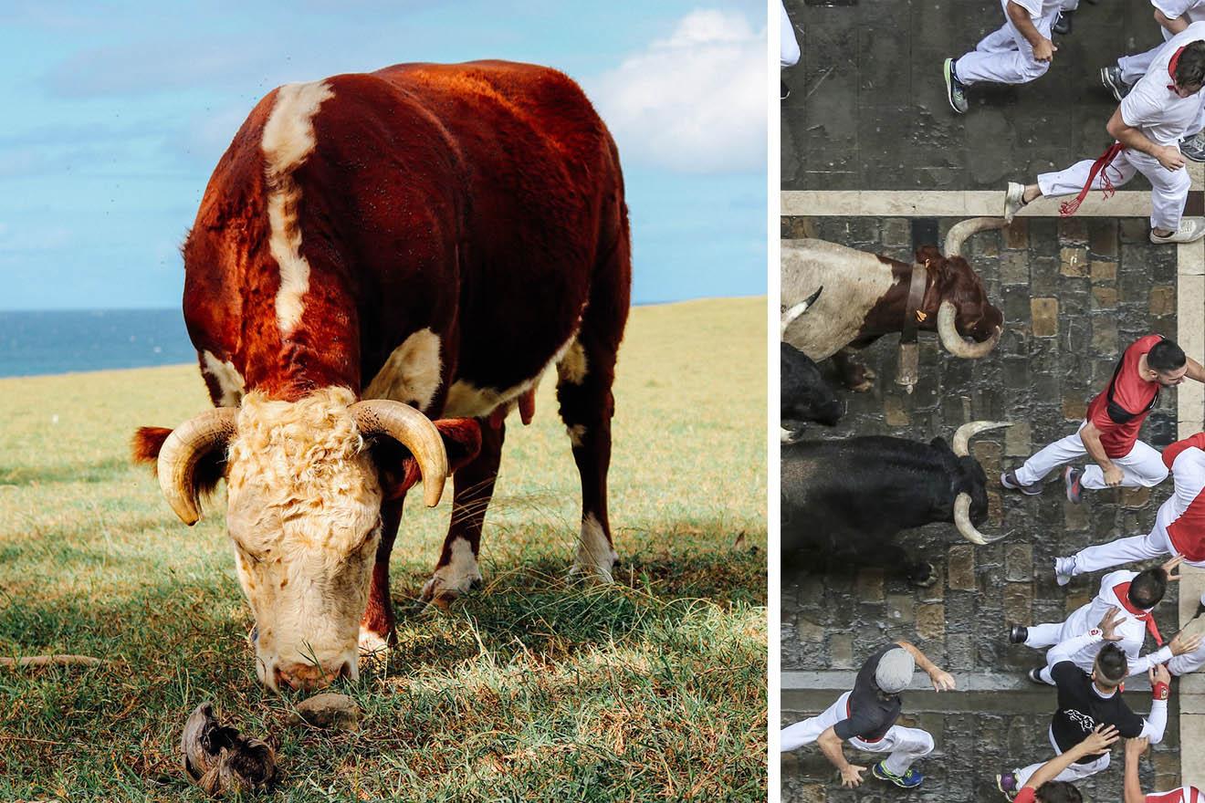 Stierhatz in Pamplona abgesagt! PETA UK bietet Geld an, damit es so bleibt
