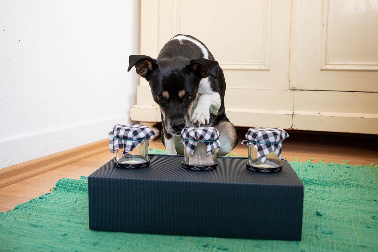 Hundespielzeug selber machen – die 5 besten Bastelideen