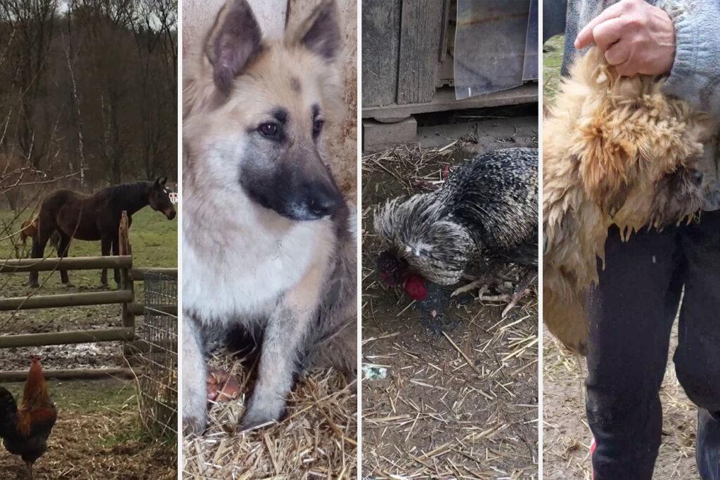 Verschiedene Tiere einer Animalhorderin