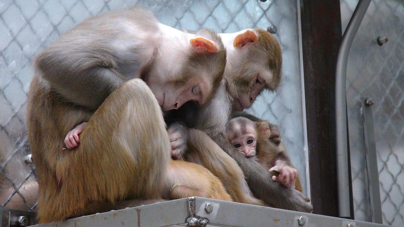 Alzheimer-Forschung: Bringt uns das Töten von Tieren wirklich weiter?