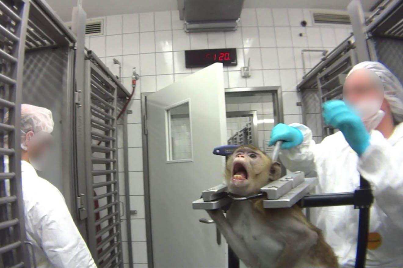 Tierversuchsskandal zeigt: Wir brauchen ein Tierschutzministerium!
