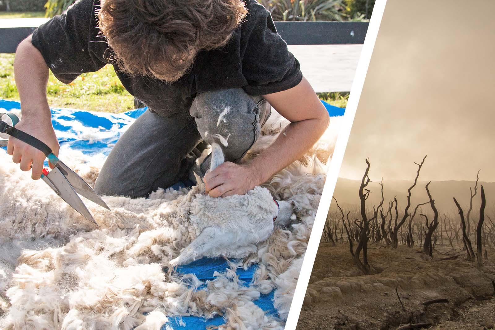 Higg Index belegt: Alpaka-Wolle zerstört die Umwelt!