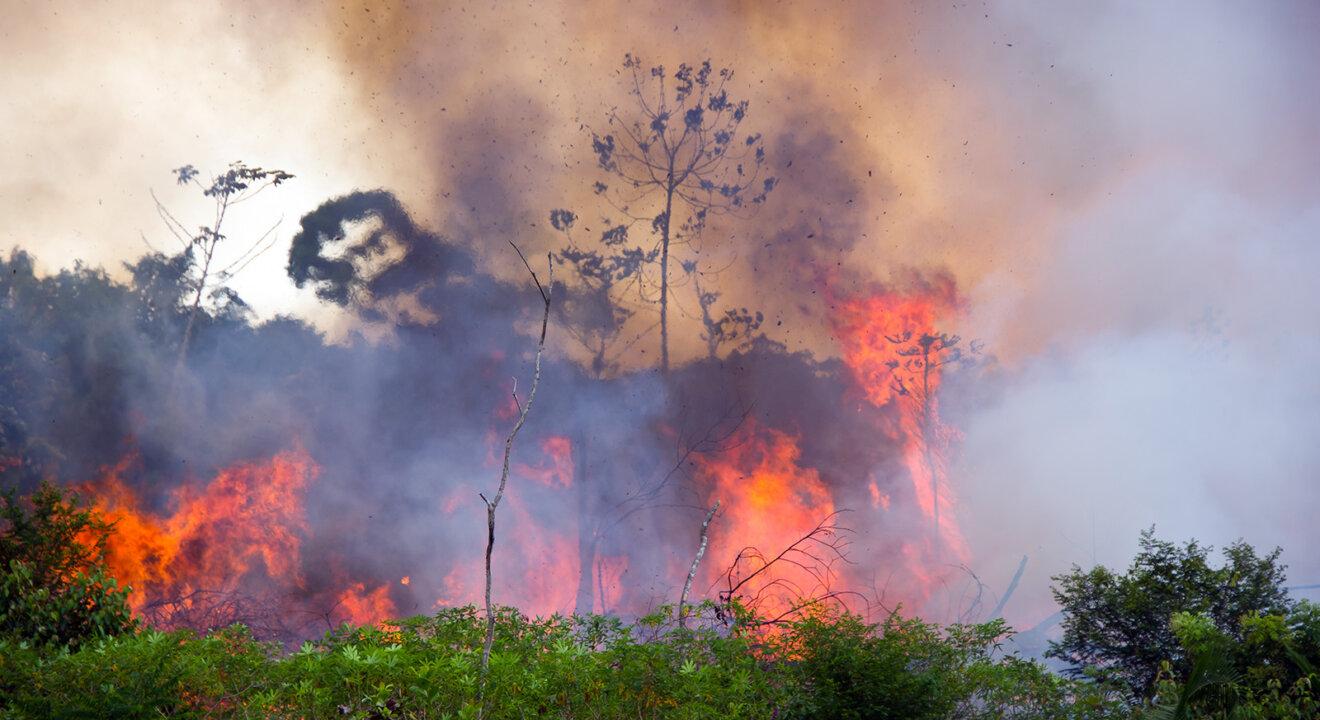 Brennender Amazonaswald