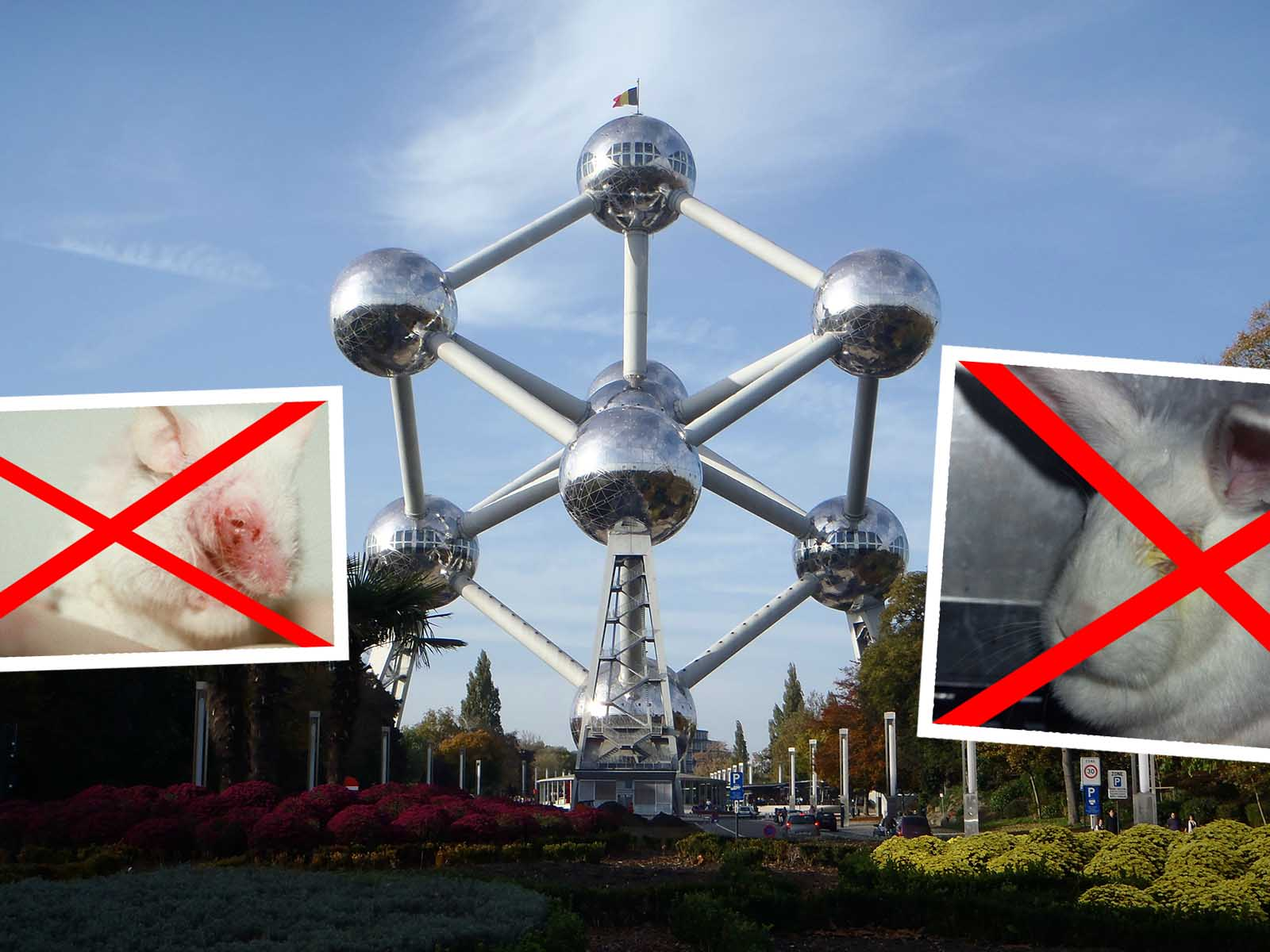 Das Aus für Tierversuche? Region Brüssel plant Gesetzesänderung