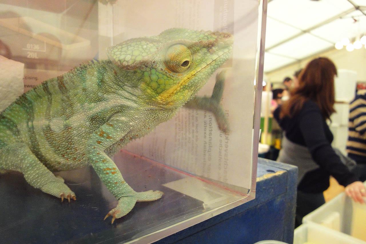 Reptilienbörse Karlsruhe: So leiden die Tiere auf der Messe