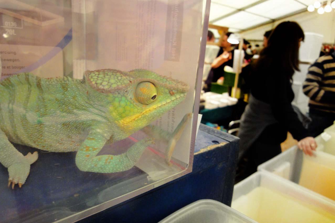 Terraristika in Hamm – die größte Reptilienbörse der Welt verbieten!