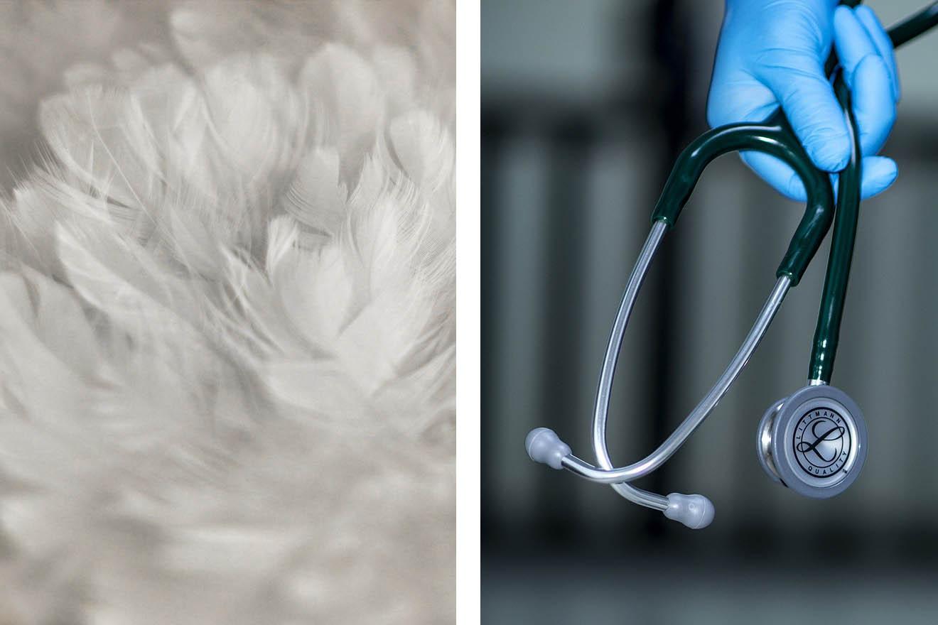 Ärzte warnen: Daunen können zu Lungenerkrankungen führen