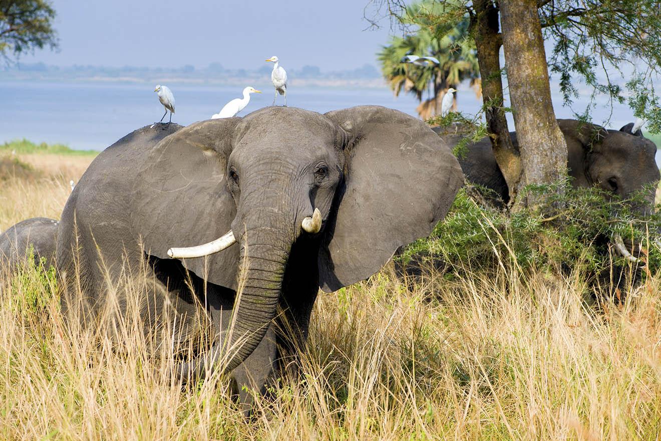 Der Elefant – 11 faszinierende Fakten über Elefanten