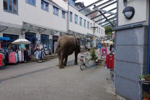 Elefant in der Fussgaengerzone