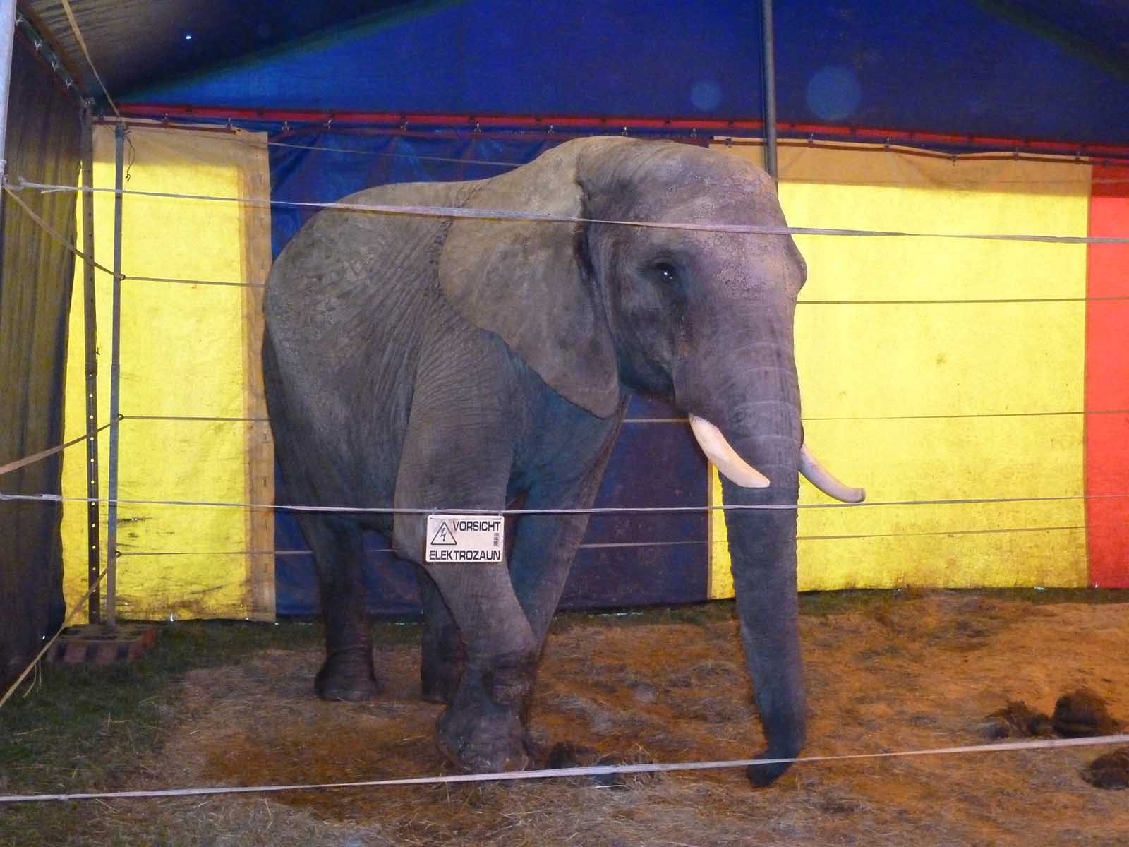 Circus Luna/Francordia, Familie Frank – Chronik der Tierschutzverstöße und weitere Vorfälle