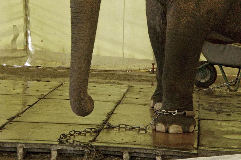 Erfolg! UNICEF distanziert sich von Circus-Krone-Spendengala