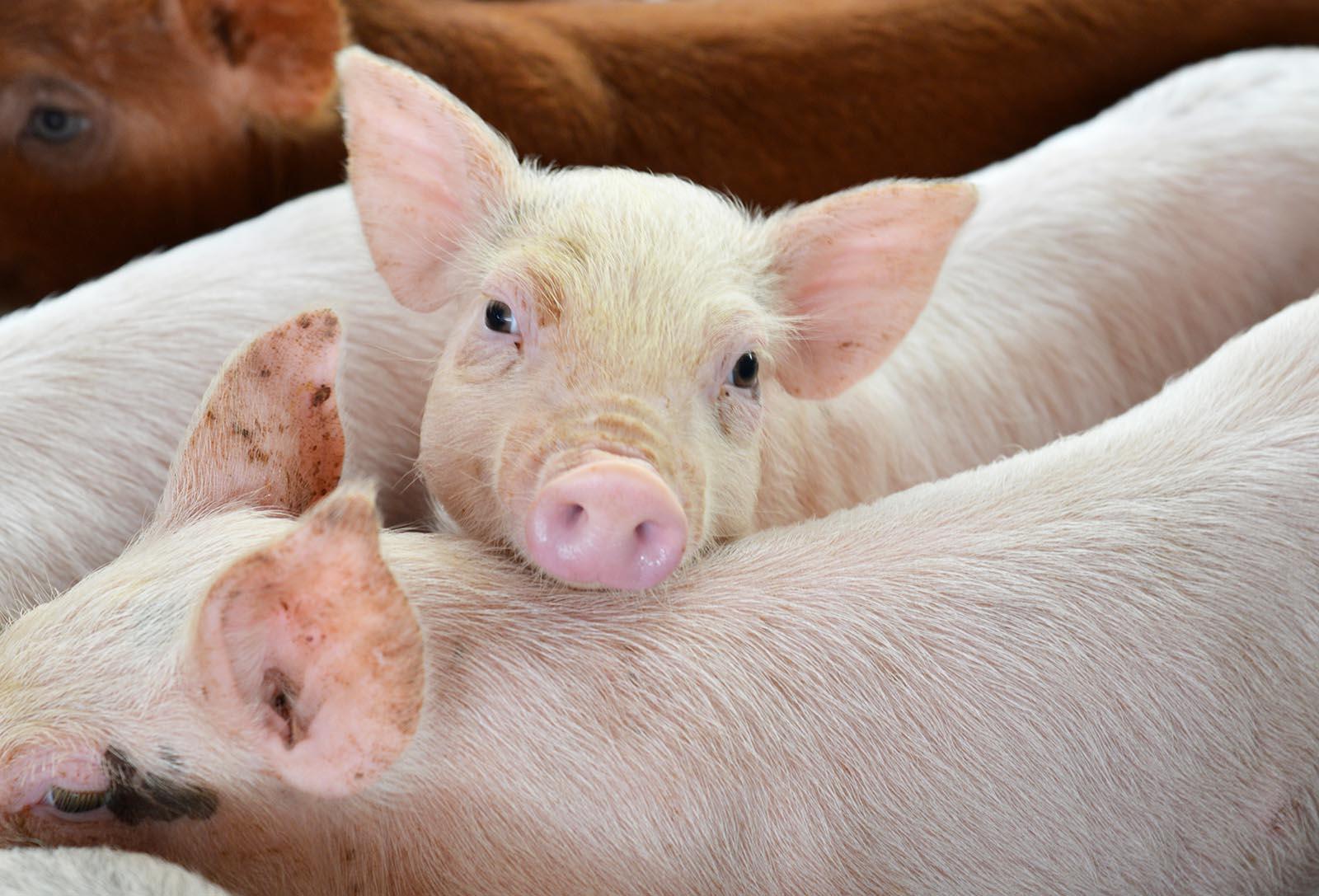 So werden Sie für Tiere in der Ernährungsindustrie aktiv