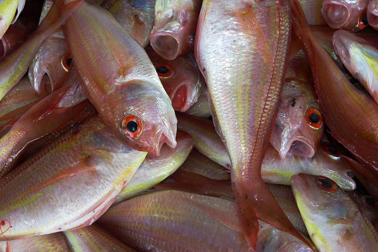 Darum ist Fisch essen schädlich für die Gesundheit