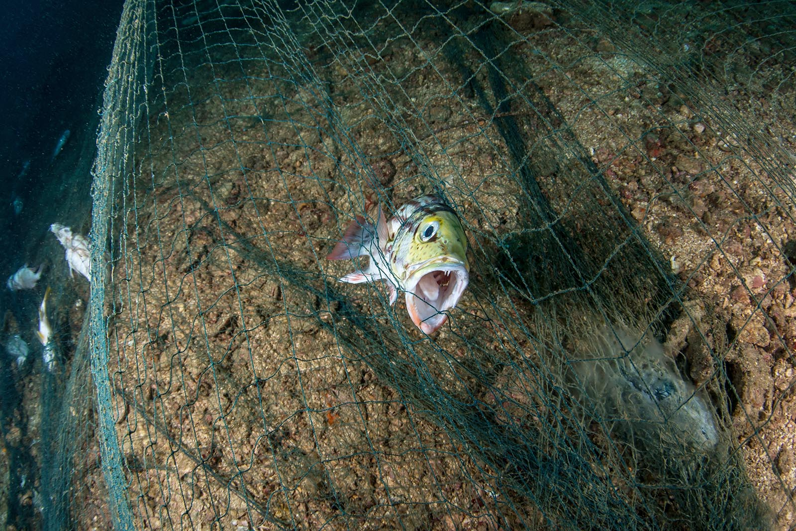 """Mehr Schleppnetzfischerei in sogenannten Meeresschutzgebieten als außerhalb. Wir brauchen echte """"No-take""""-Zonen!"""