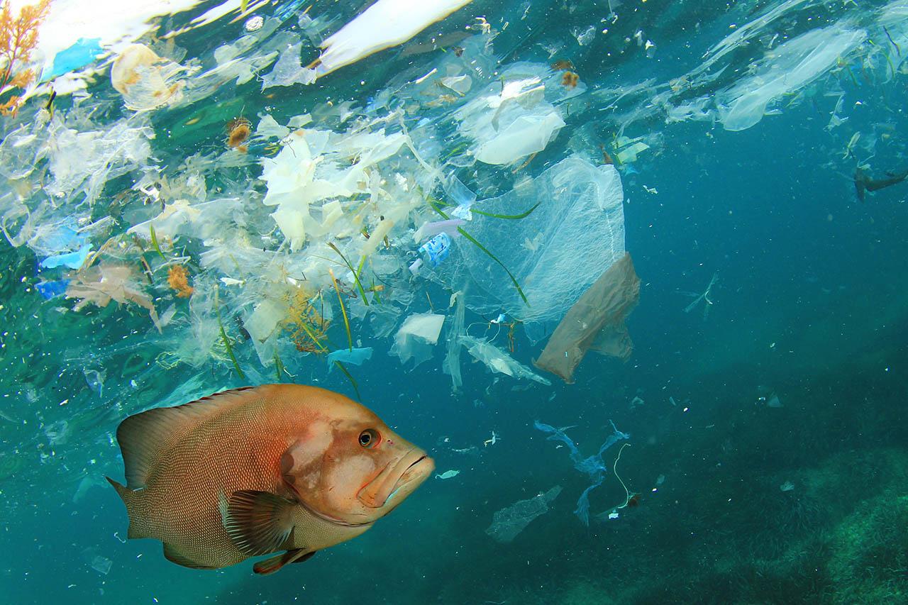 Plastik im Meer: Die Folgen der Vermüllung für Umwelt und Tiere