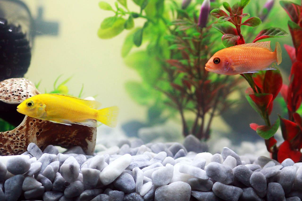 9 Grunde Warum Aquarium Fische Traurige Haustiere Sind