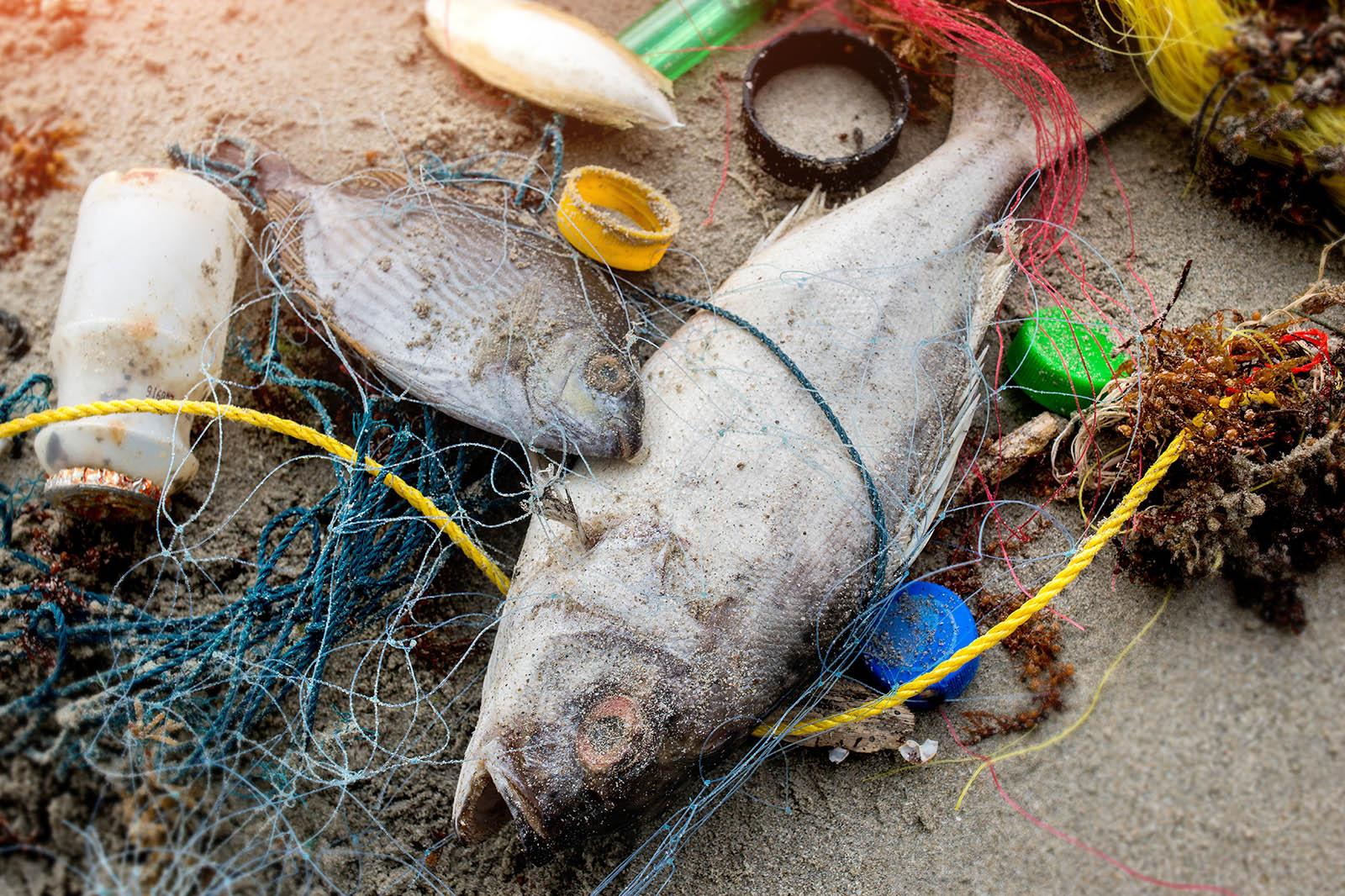 Toter Fisch liegt im Muell am Strand