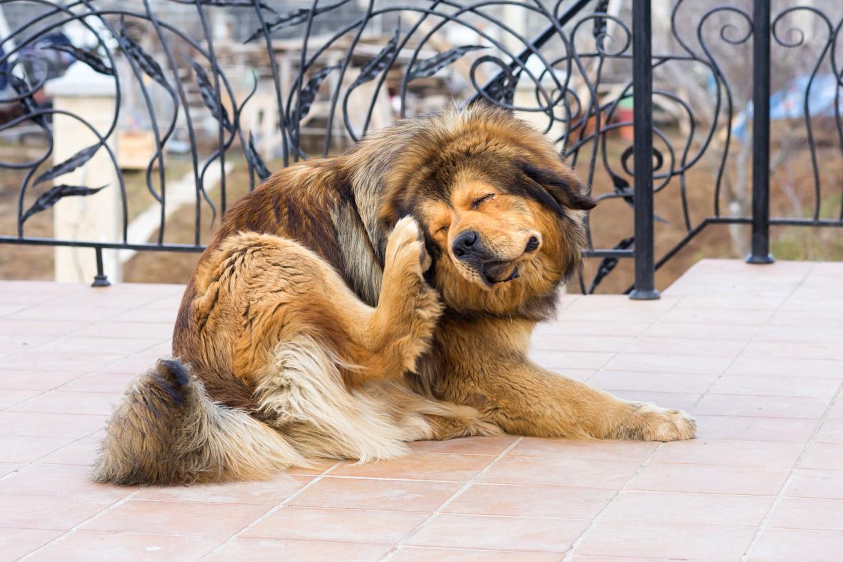 Flöhe bei Hunden und Katzen: Die besten Mittel und Tipps