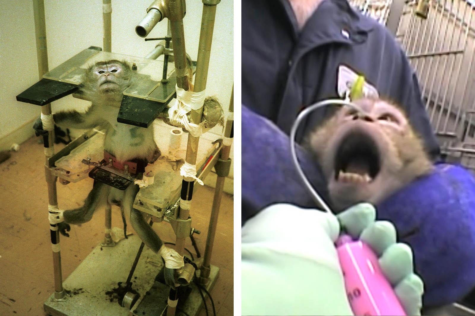 8 Folterinstrumente, die in Tierversuchslaboren verwendet werden