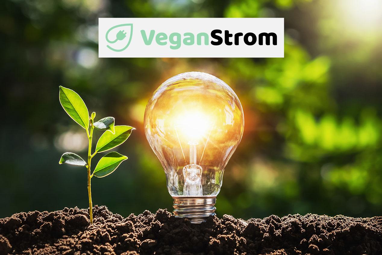 Vegan Strom: Der tierfreundliche Stromtarif von Greenstone Energy