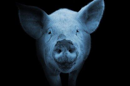 Grundrechte für Tiere