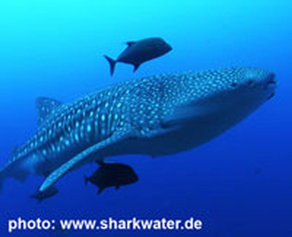 das unbekannte leben von haien