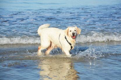 Hund am Strand im Meer