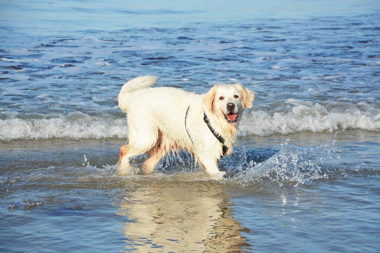 Urlaub mit Hund, Katze & Co. – 7 wichtige Tipps für tierische Ferien