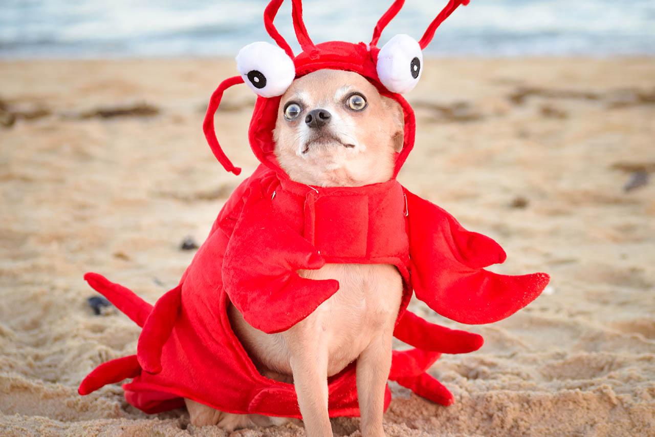 Kostüme für Hunde – lustig oder Tierquälerei? Alle Infos & Tipps