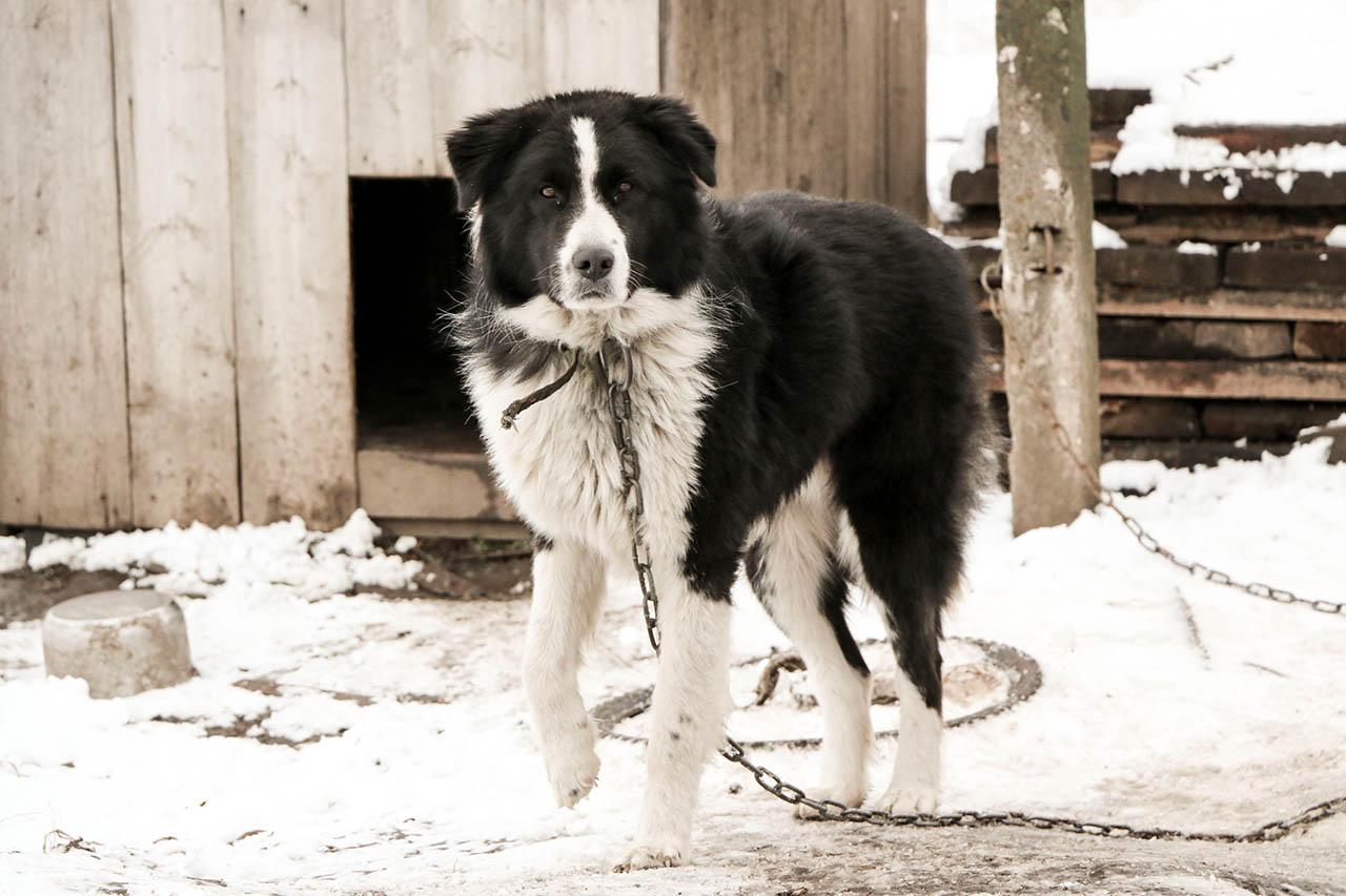 Tipps zur Kältewelle: So helfen Sie Tieren im Winter