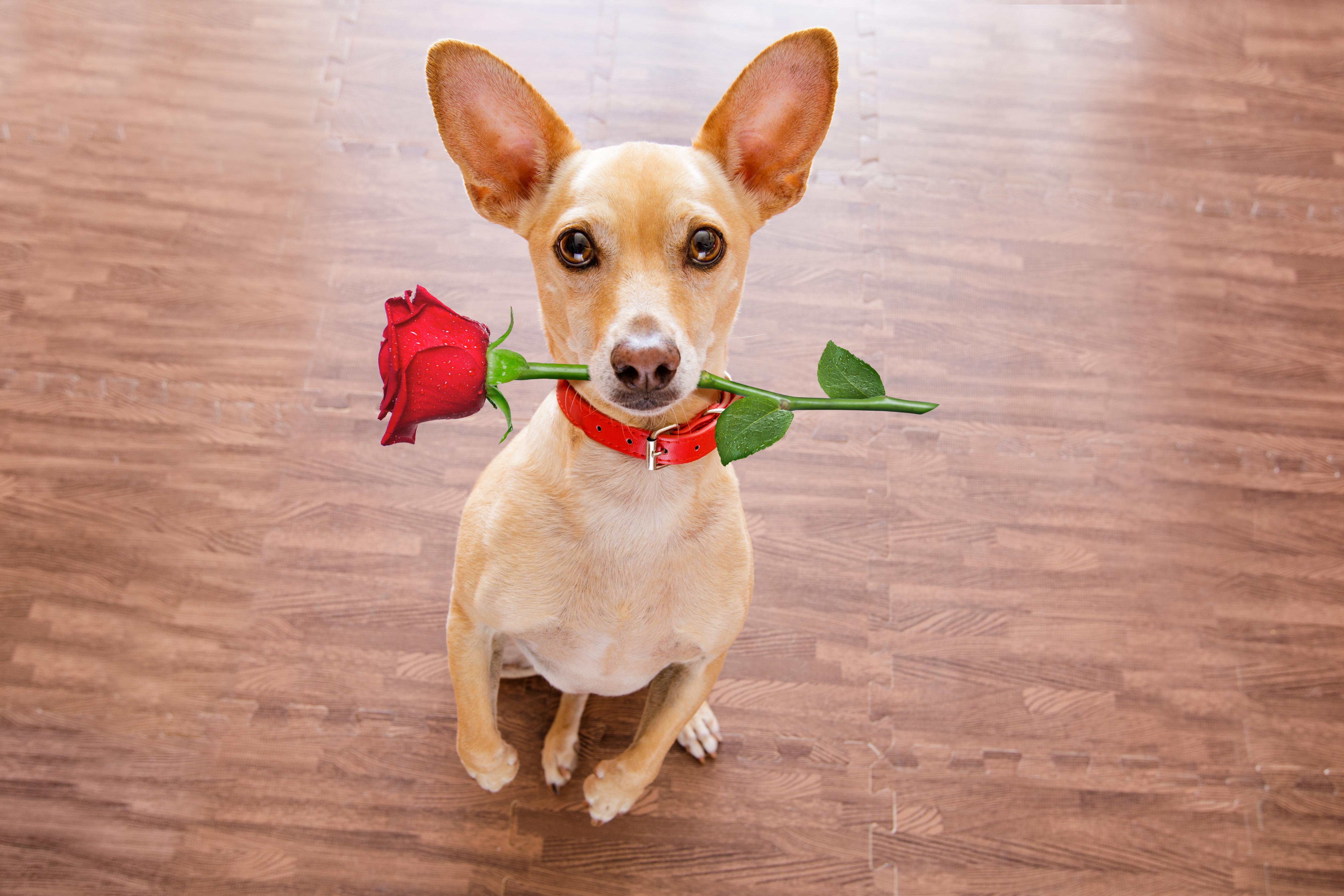 5 Tierfreundliche Valentinstag Geschenke Fur Manner Frauen