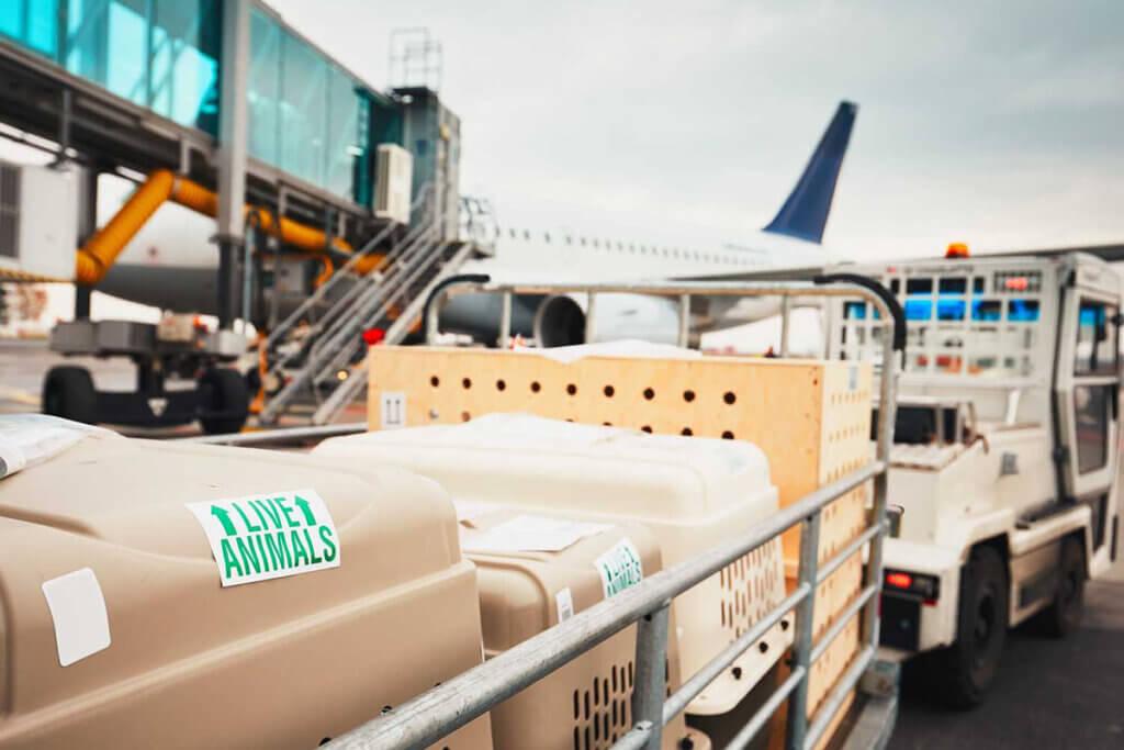Transportboxen werden zu einem Flugzeug gebracht