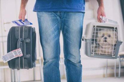 Person traegt Koffer und Transportbox mit Hund