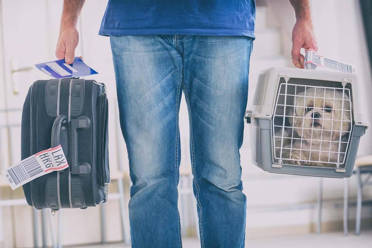 Fliegen mit Hund oder Katze: Die besten Tipps für den Flug