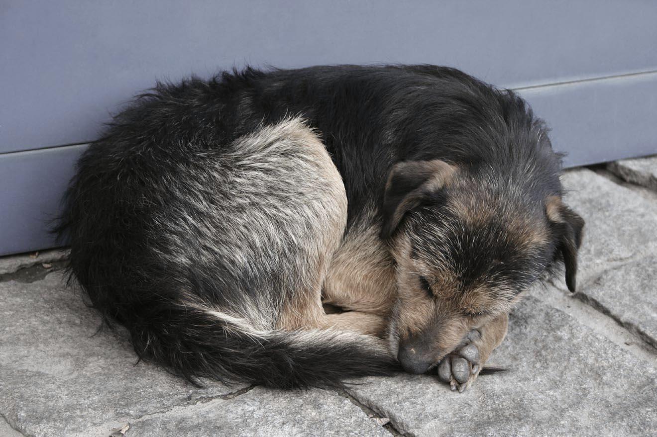 Tiere und Trauer – können Tiere trauern?