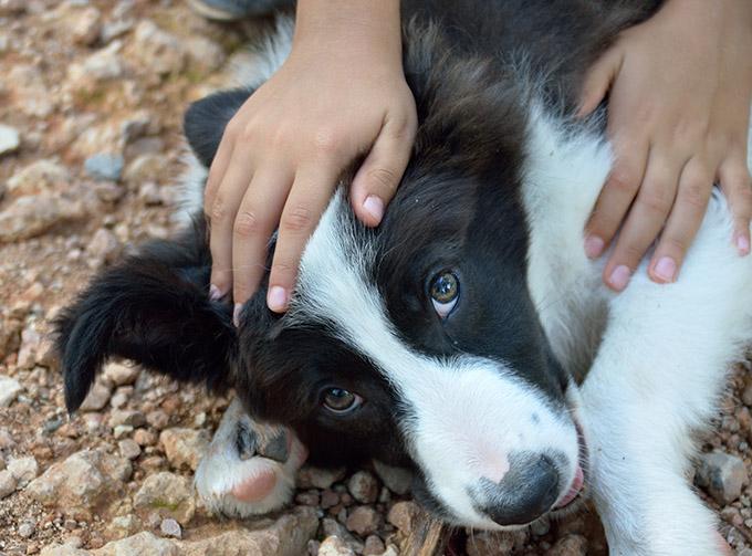 Gestik und mimik bei hunden