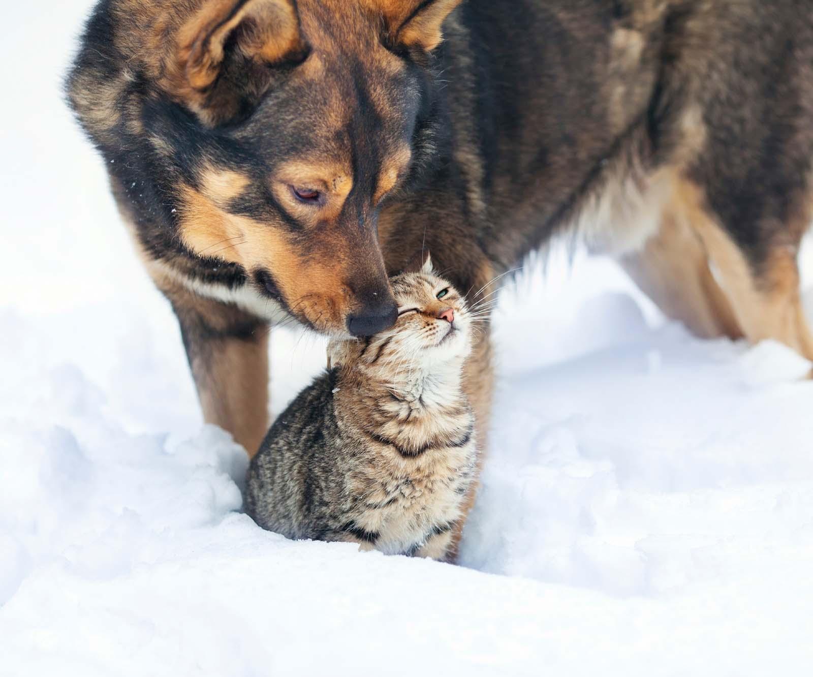 PETA-Broschüre über tierische Mitbewohner