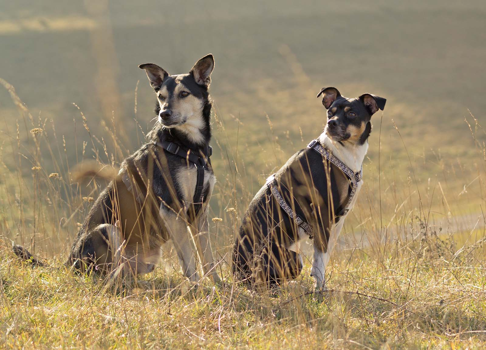 Der Hundeführerschein: Alle Infos über den Sachkundenachweis
