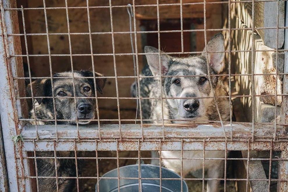 Russland hat ein neues Tierschutzgesetz – 5 wichtige Fakten