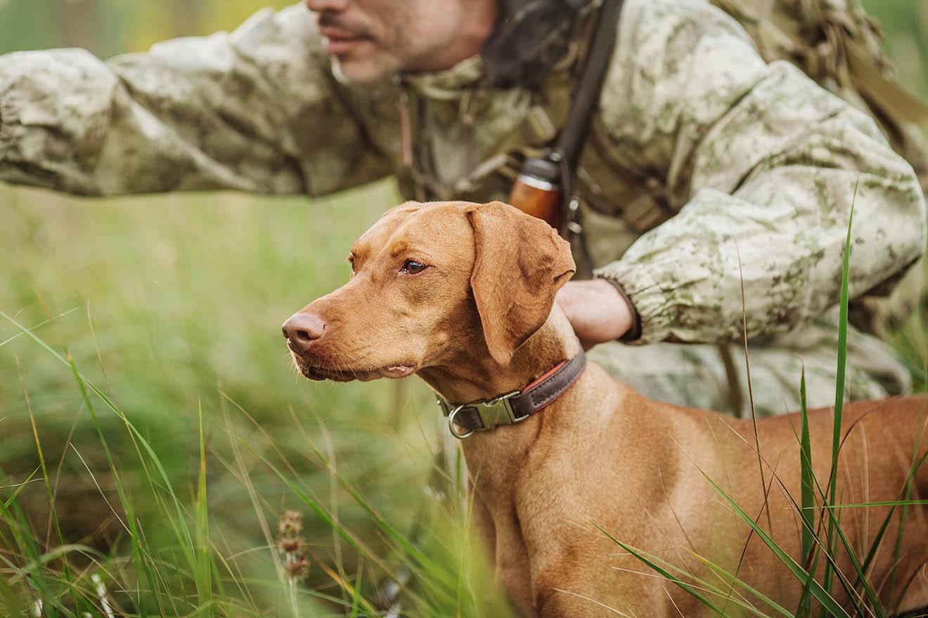 Jagdhunde – brutale Ausbildung und gefährliche Einsätze