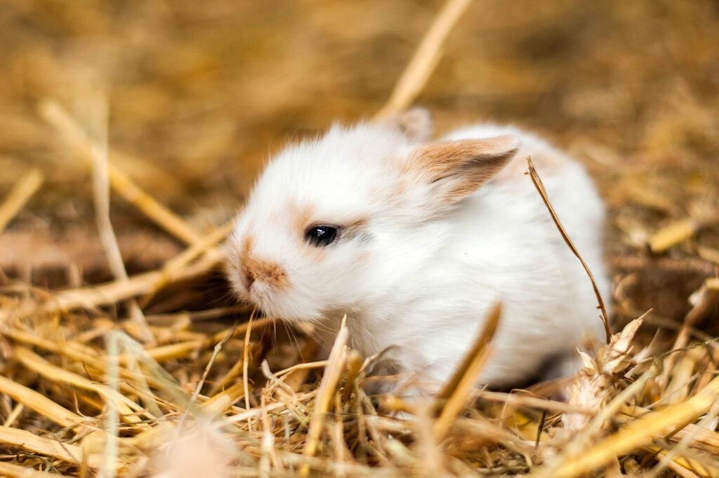 Junges Kaninchen im Streu