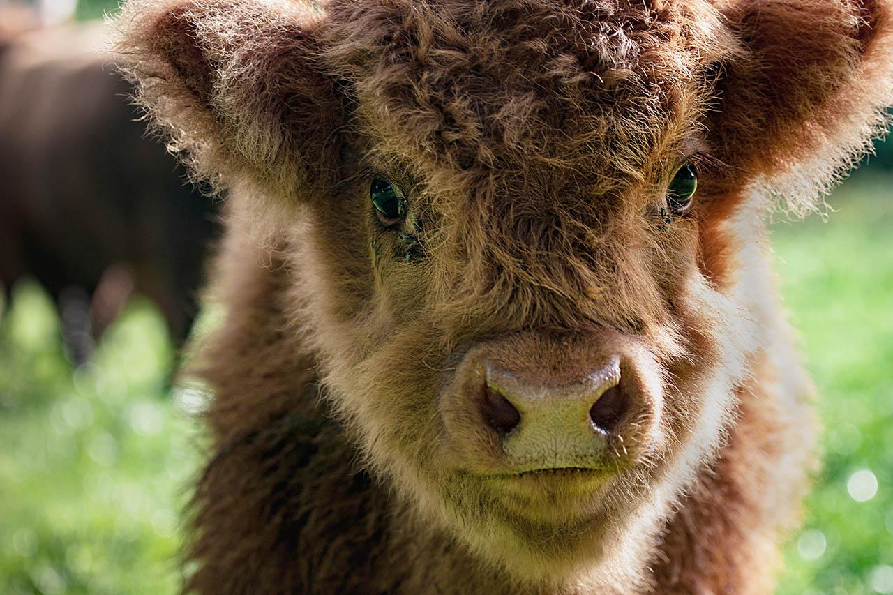 9 süße Tierbabys, die leben wollen