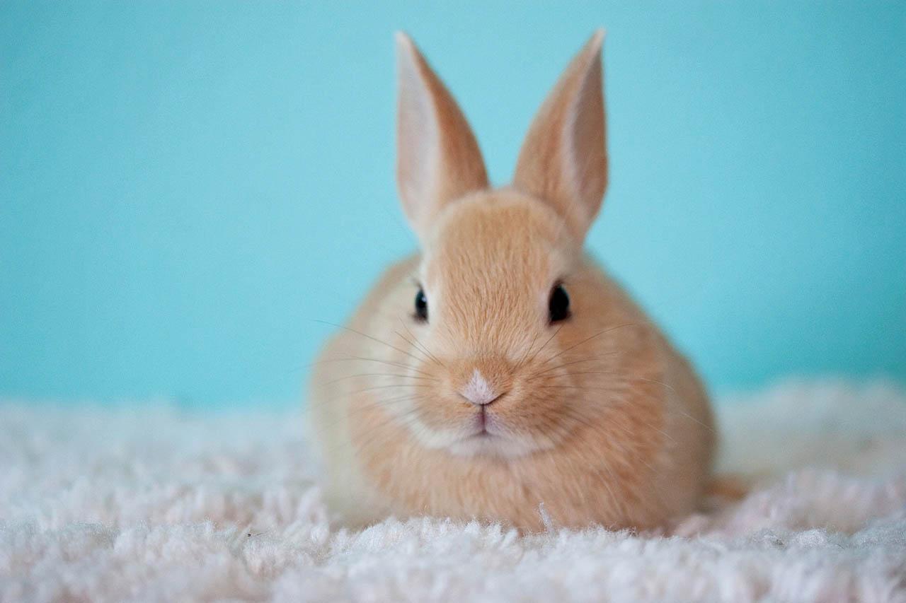 ERFOLG: China lässt zwei weitere tierversuchsfreie Kosmetiktests zu