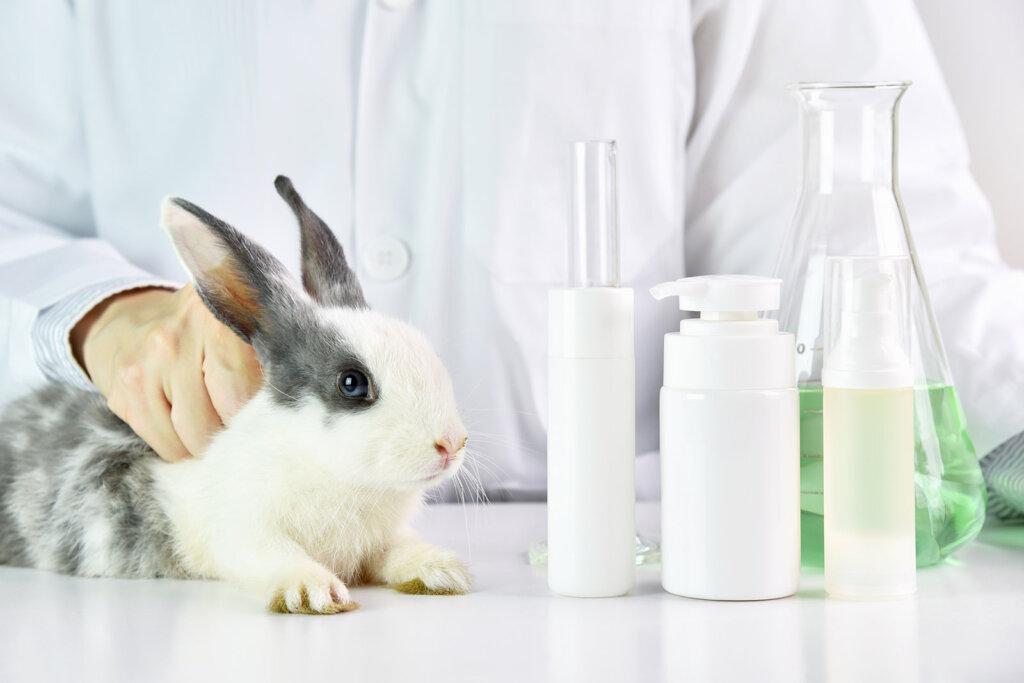 Kaninchen im Versuchslabor