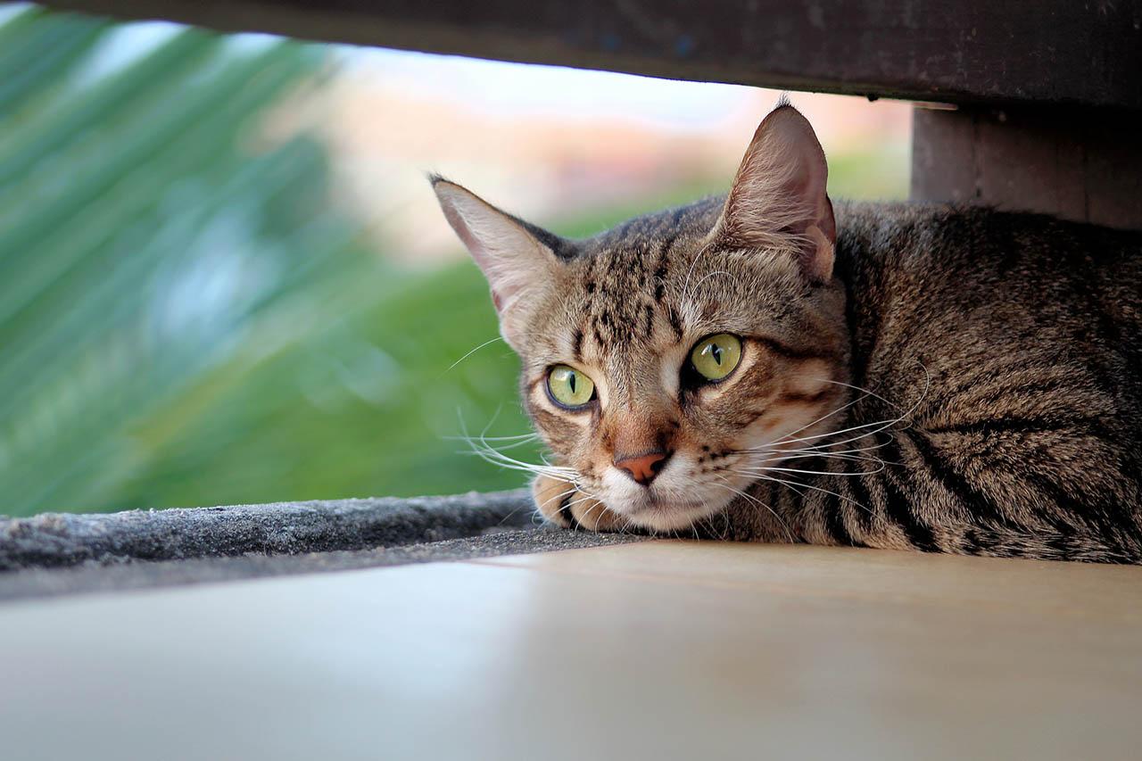 Kastrations- und Registrierungspflicht für Katzen