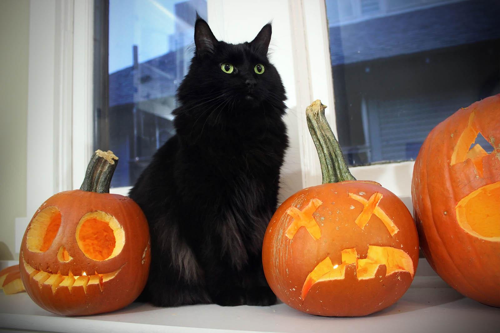 Halloween mit Hund und Katze: Darauf sollten Tierhalter achten